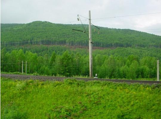 Forest alongside the Trans-Siberian railway