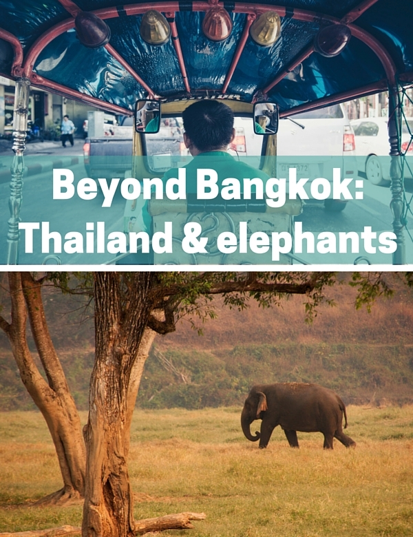 Thailand and elephants