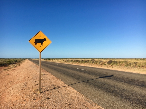 Coral Coast expands comfort zone - driving alone.jpg