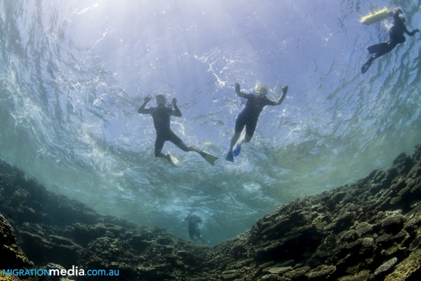 Coral Coast stretches comfort zone - snorkelling with sharks