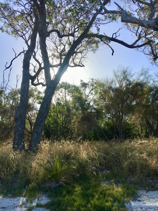 The Australian bush near the estuary in Mandurah, Western Australia