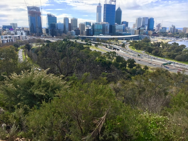 The bush at Kings Park overlooking Perth city centre
