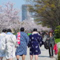Sumo wrestlers and cherry blossom at Osaka Castle Park
