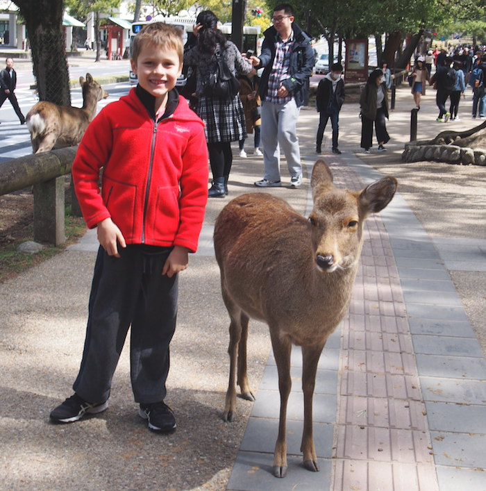 Being brave about meeting the Nara deer in Japan