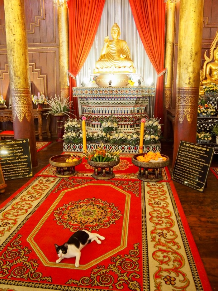 Wat Chom Sawam in Phrae - temple cat