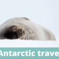 Antarctic travel - The Thoughtful Travel Podcast Episode 184